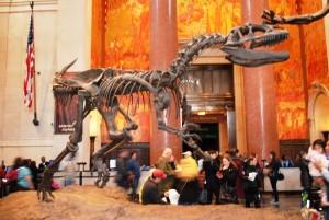 Utrinka iz Prirodoslovnega muzeja, ki se ponaša tudi s fosili dinozavrov.